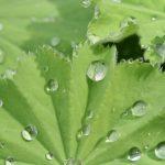 Naturheilkunde und Homöopathie bei häufigen Frauenerkrankungen